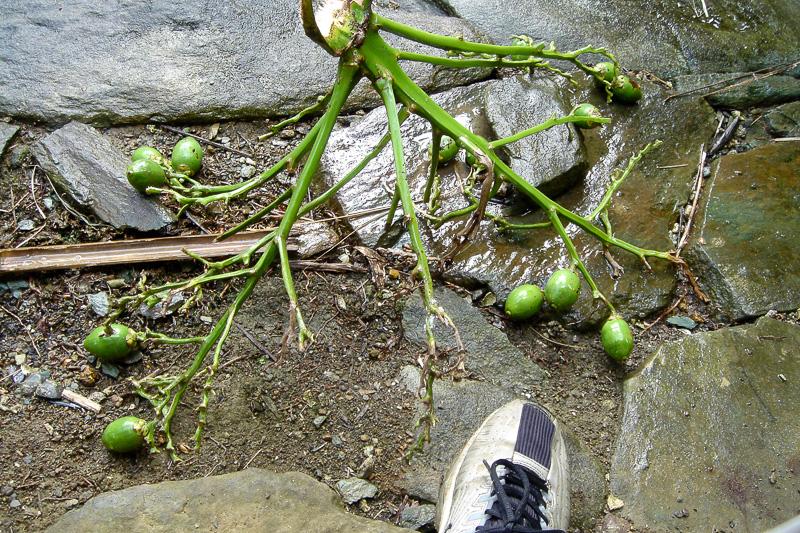 Rudy's Blog » Blog Archive » Micronesia 3: Betel Nut