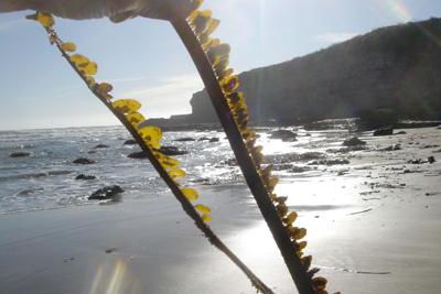 Sunny Seaweed
